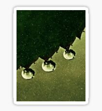Leaf Drops Sticker