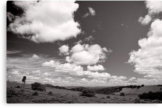 Valley of Clouds - Dorrigo - NSW - Australia by Norman Repacholi