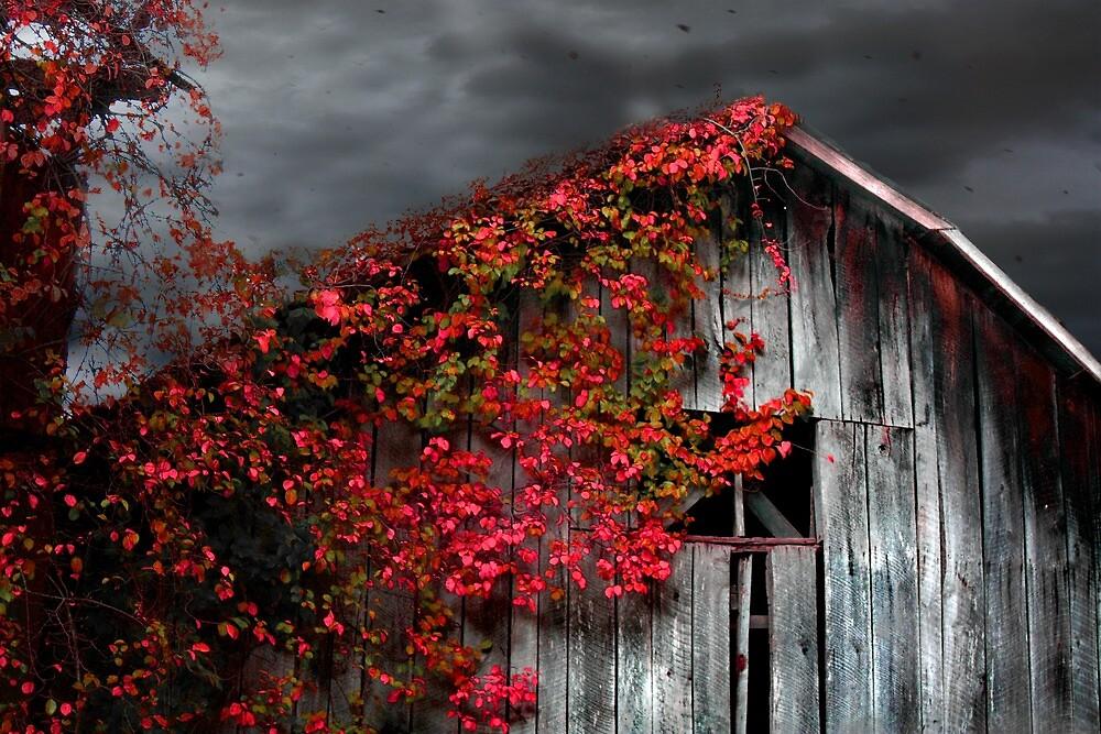 Fall Barn  by Gray Artus