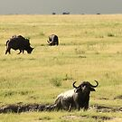 Buffalo Flood Plain by Donald  Mavor