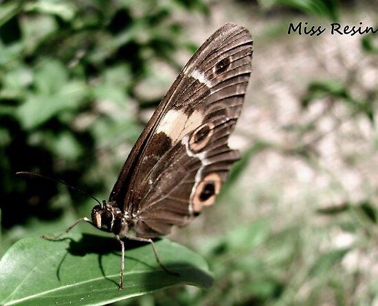 A Fluttered Moment by MissResin