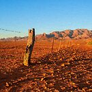 Outback Fence       (OP) by Ray Warren
