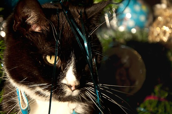 It's Christmas for the cats! by Maisie Sinclair