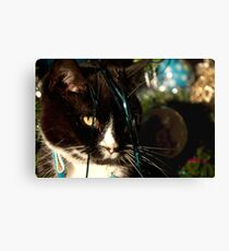 It's Christmas for the cats! Canvas Print