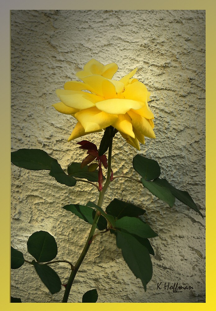 Yellow Rose by Kenneth Hoffman