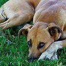 watchdogl by pcfyi
