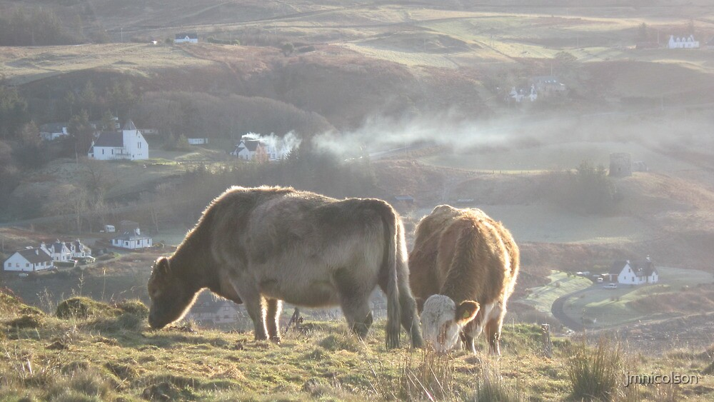 Cows by jmnicolson