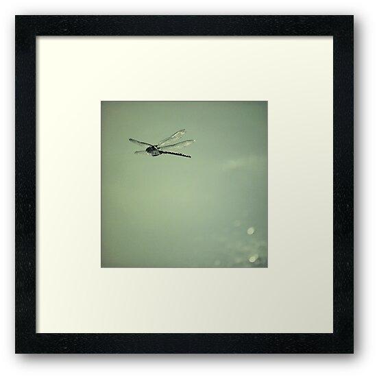 Dragonfly by Anne Staub