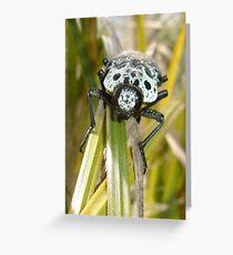 Capnodis Cariosa (Chrysochroinae) Greeting Card