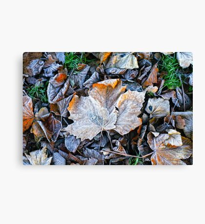 Bed of leaves Canvas Print