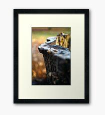 Frosty wood Framed Print