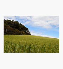 True The Landscape Photographic Print