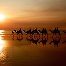Camels at Sunset by Extraordinary Light