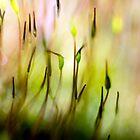 Moss at Sunset by KAREN COLEBECK