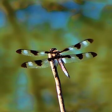 dragonfly on stick by vigor