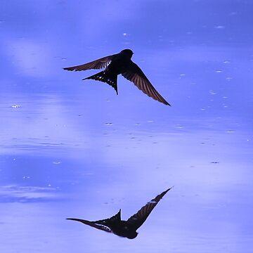 Welcome swallows by hartlandangel