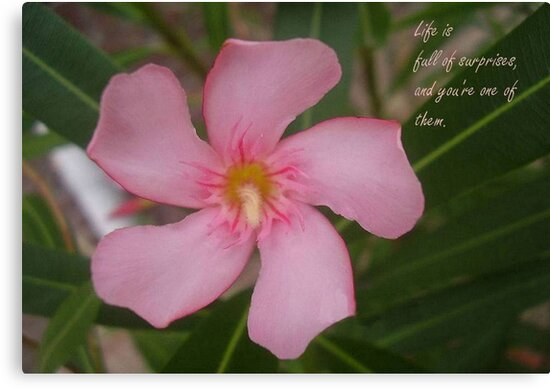 Pink Oleander Close Up Life Is Full of Surprises Greeting  by taiche