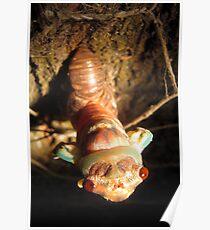 Cicada Hatching 2 Poster