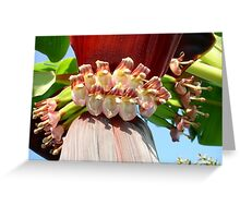Flower Of The Banana Plant Greeting Card