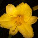 flower by Hotlilmamax6