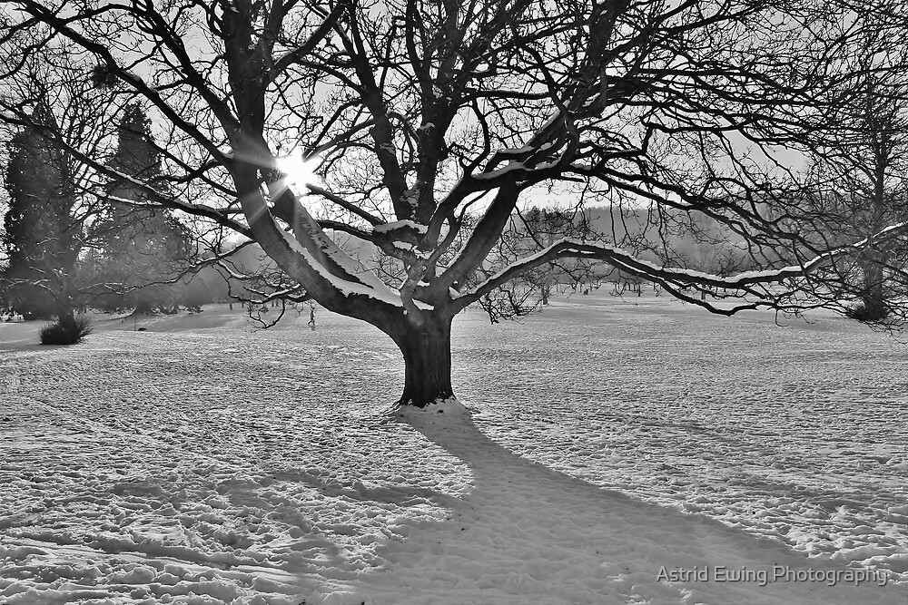 Winter Tree by Astrid Ewing Photography