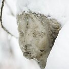 This morning my garden - Balkan freeze  by Aleksandar Topalovic