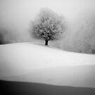 January 2013 by StefaniaC
