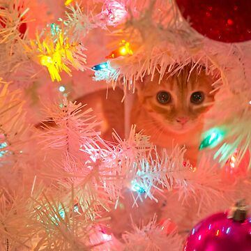 Kitty in a Christmas Tree by meltedxpopsicle