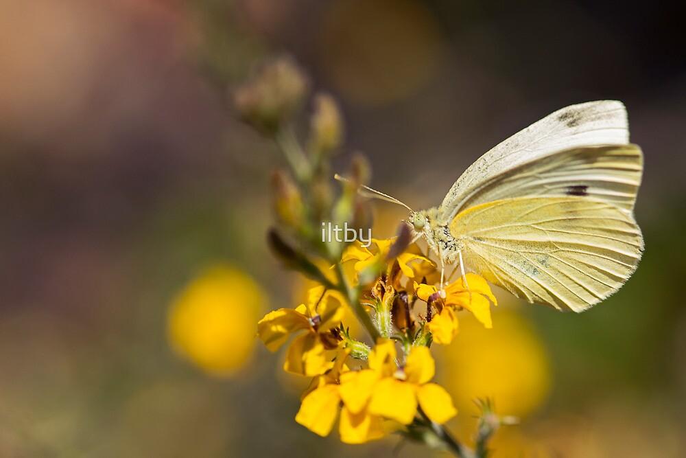 Flutterby by Josie Eldred