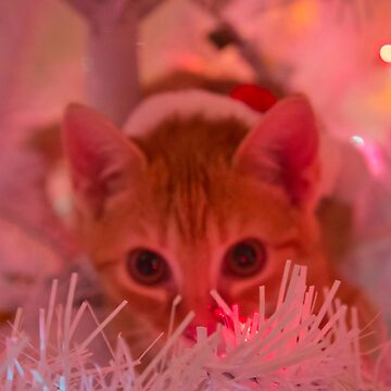 Christmas Kitty is Watching You! by meltedxpopsicle