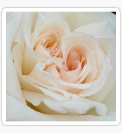 A Double Hearted Romantic White Rose Sticker