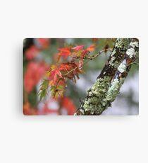 Napa Tree Canvas Print