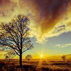 Setting Sun by Lee Wilson