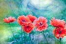 Poppies by LudaNayvelt