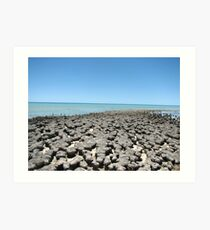 Stromatolites Shark Bay Art Print