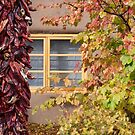 Chilli Fall Foliage by Tracy Riddell