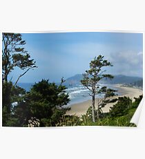 Wind bent trees, Pacific Coast, Oregon Poster