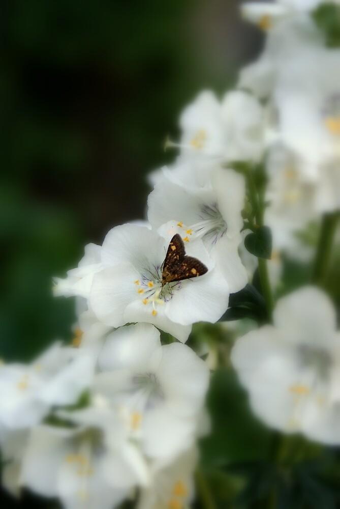 Butterfly On White Flower by Drewlar