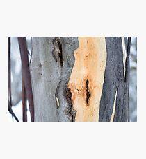 Snow Gum detail at Falls Creek Vic Photographic Print