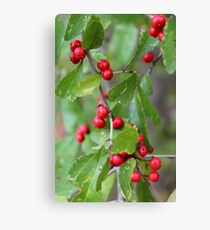 Deciduous Holly Canvas Print