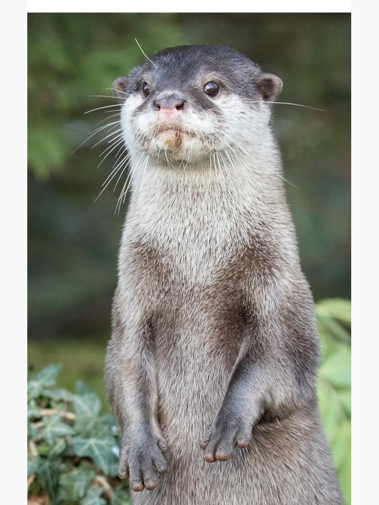 Otter paw-trait by dailyanimals