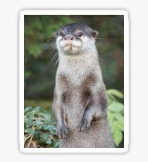 Otter paw-trait Sticker