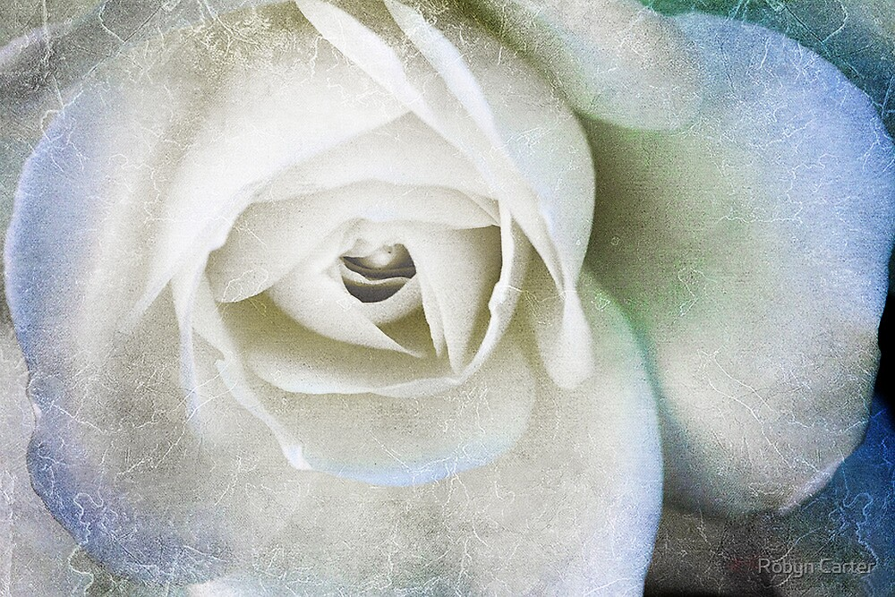 The White Rose by Robyn Carter