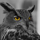 OWL by mps2000