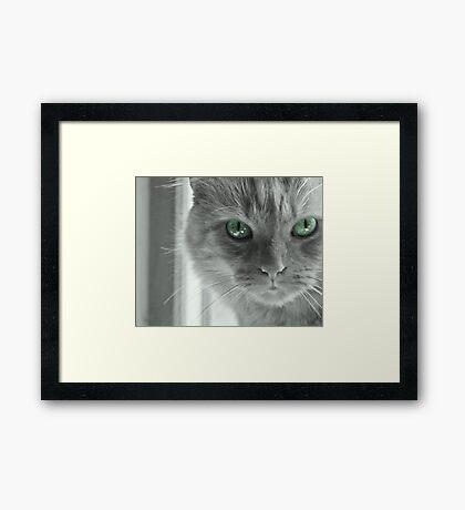 Eyes of Green ~ Framed Print