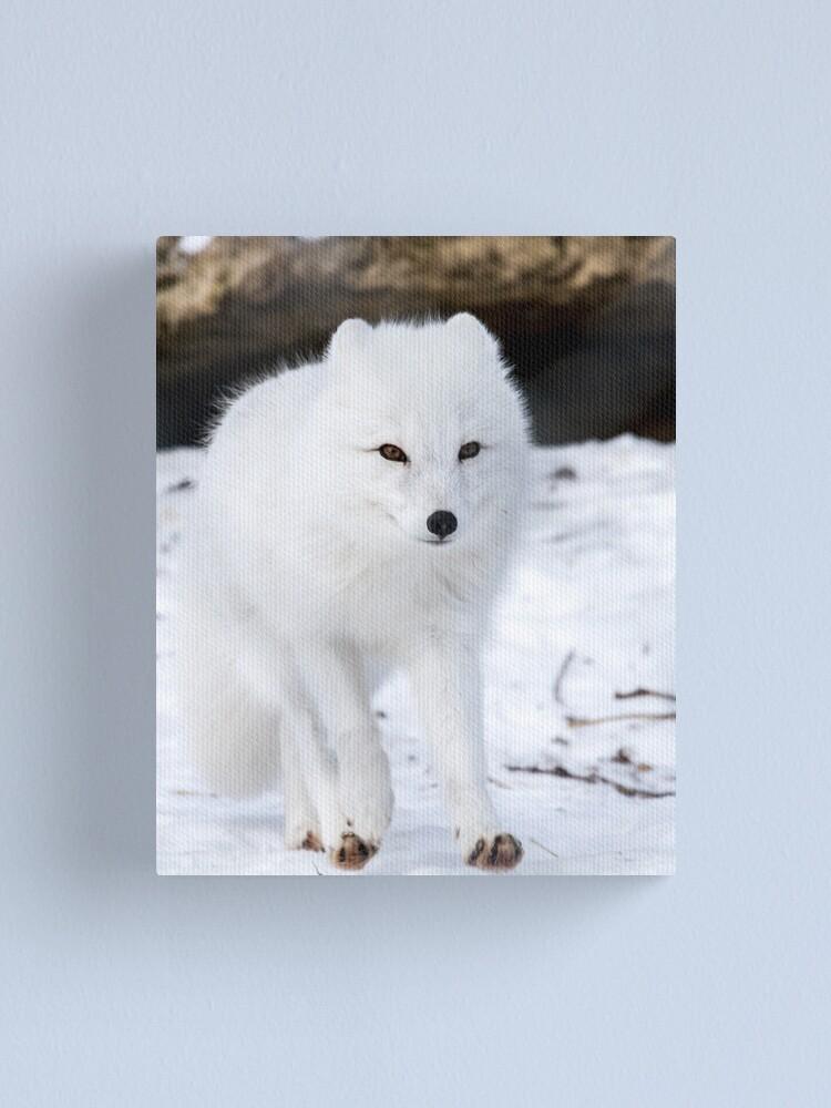 Alternate view of Fox trot Canvas Print