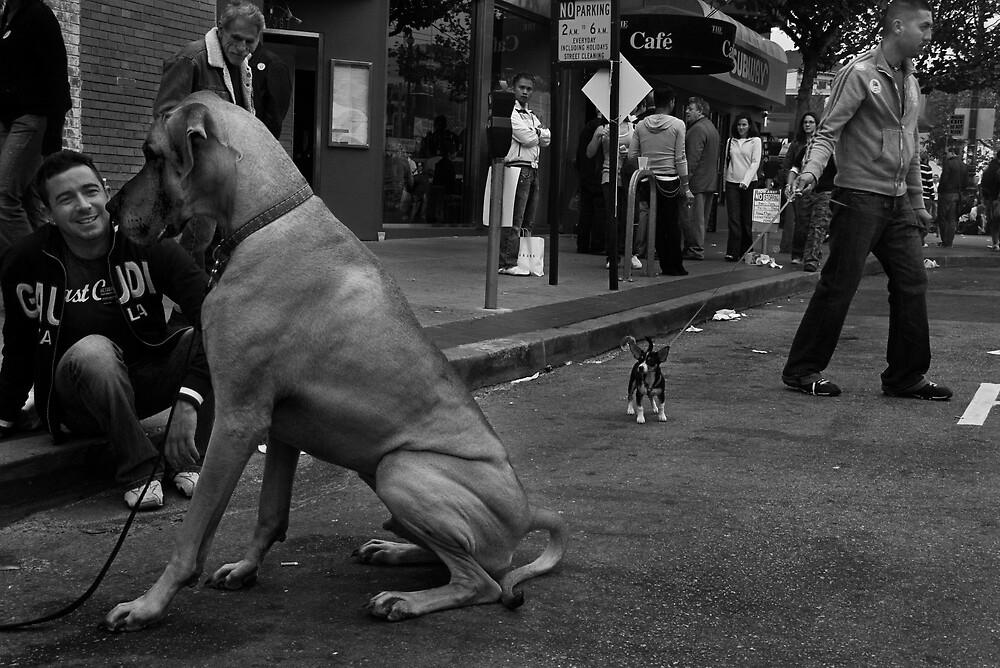 San Francisco, 2005 by jbuhler