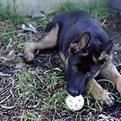 I'll just mind the ball OK? by mooksool