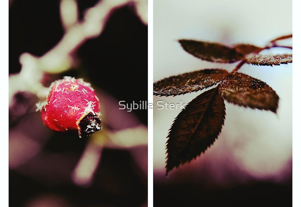 A Sprinkling of Sugar by Sybille Sterk