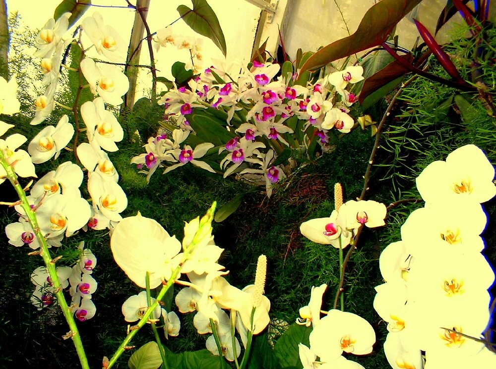 """""""White Orchids"""" by njchip123"""